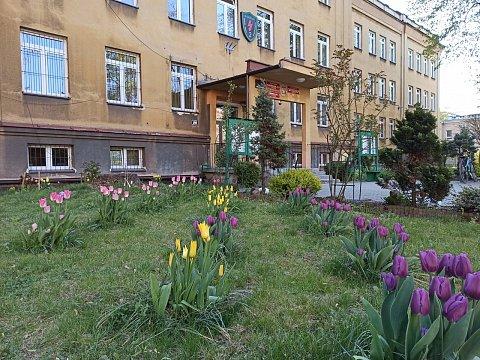 kwiaty w szkolnym ogrodzie